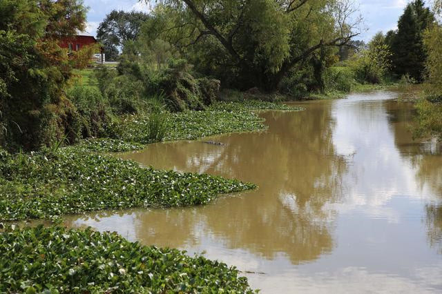 又出现了警示牌,小心蛇和鳄鱼 刚走到桥边,就看到了水里的鳄鱼 乔治