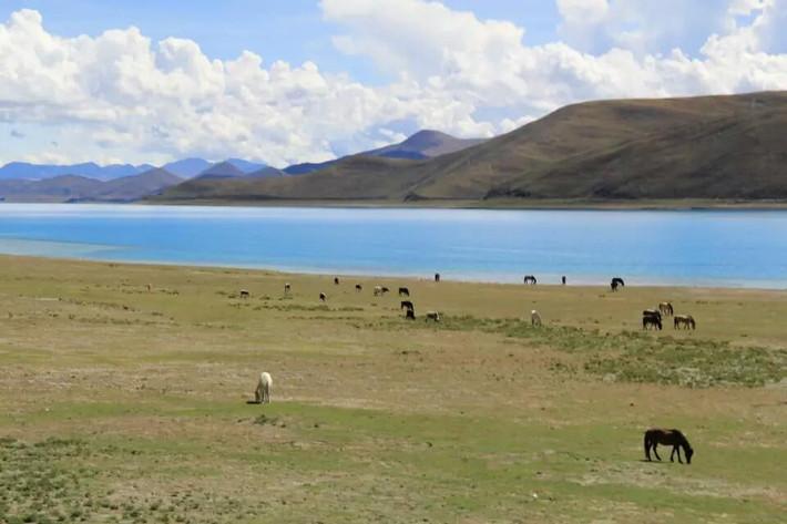高原牛羊风景图片