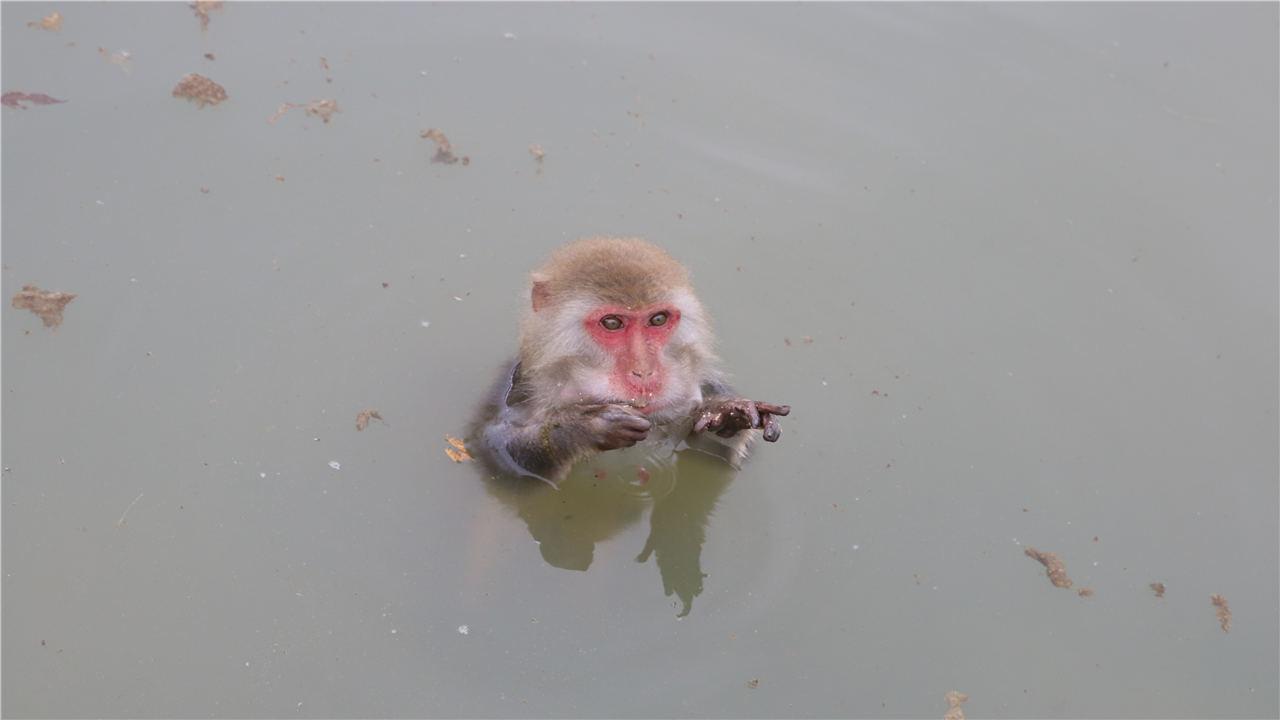 常州淹城野生動物世界一日遊
